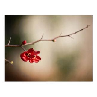 Cartes postales de floraison de coing