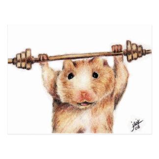 Cartes postales de séance d'entraînement (hamster)
