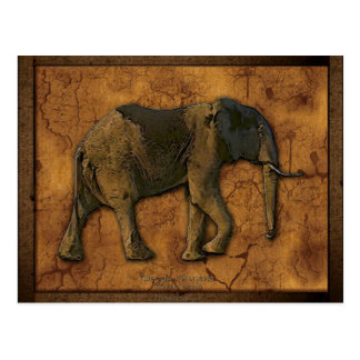 Cartes postales d'éléphant africain