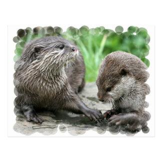 Cartes postales d'habitat de loutre