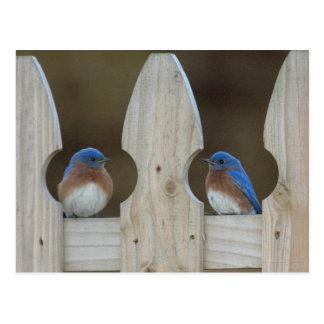 Cartes postales d'oiseau bleu