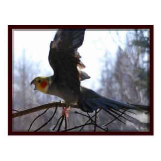 cartes postales folles d'oiseau