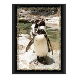 Cartes postales mignonnes de pingouin de Humboldt