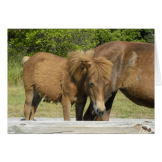 Cartes Poulain d'Assateague