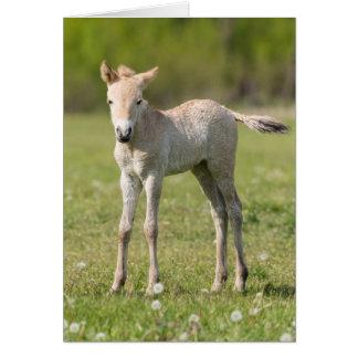 Cartes Poulain du cheval de Przewalski, Hongrie