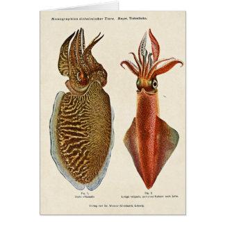Cartes Poulpe 1913 d'und de sépia