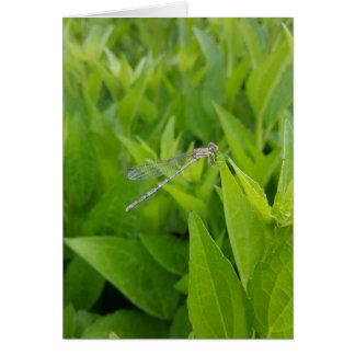 Cartes pour notes argentés de libellule (blanc à