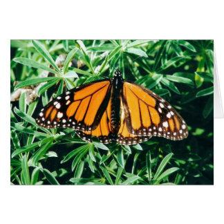 Cartes pour notes de papillon