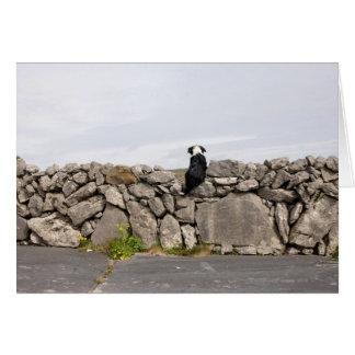 Cartes Poursuivez se reposer sur un mur en pierre