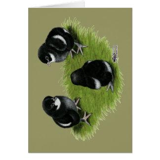 Cartes Poussins de cuivre noirs de Marans