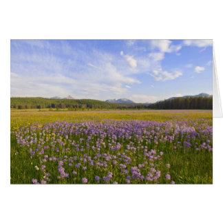 Cartes Pré des fleurs sauvages de penstemon dans les 2