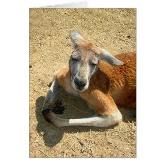 Cartes prière de kangourou