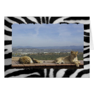 Cartes Produit paresseux de lion