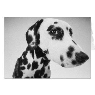 Cartes Produits dalmatiens