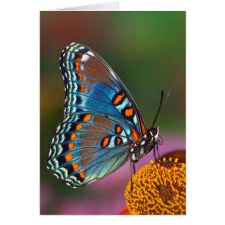Cartes Profil de papillon sur une fleur