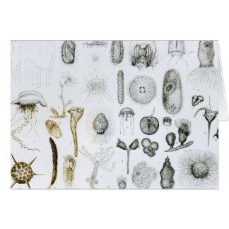 Cartes Protozoaires et coelentérés