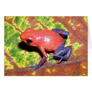 Cartes Pumilio de Dendrobates - grenouille de dard de
