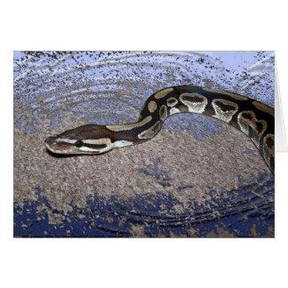 Cartes Python royal ou python de boule
