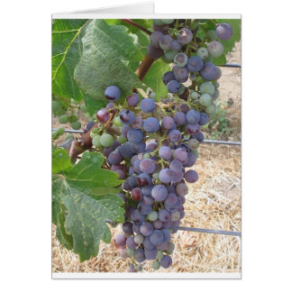Cartes Raisins de Napa Valley