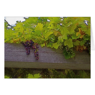 Cartes Raisins de vignoble