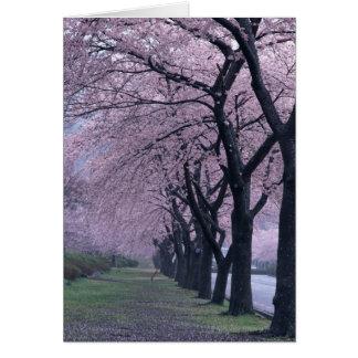 Cartes Rangée des arbres de cherryblossom