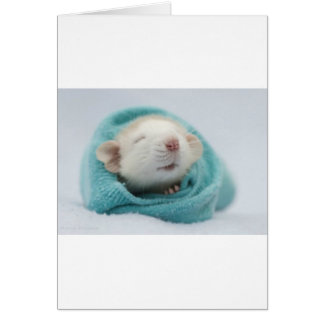 Cartes Rat mignon