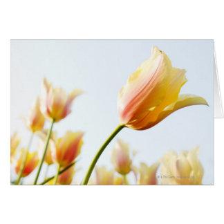 Cartes regarder des tulipes s'élevant dans un jardin