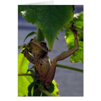 Cartes Repli de moine la grenouille débonnaire