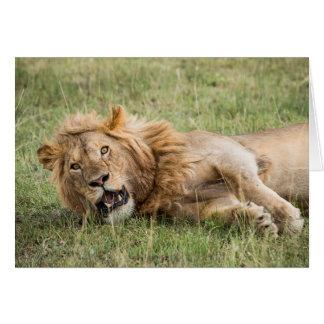 Cartes Repos masculin de lion