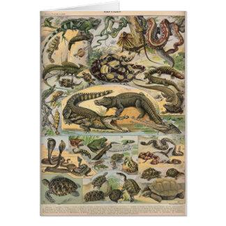 Cartes Reptiles