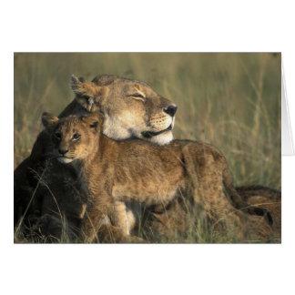 Cartes Réservation de jeu du Kenya, Mara de masai, lionne