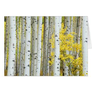 Cartes Réserve forestière des Etats-Unis, le Colorado,