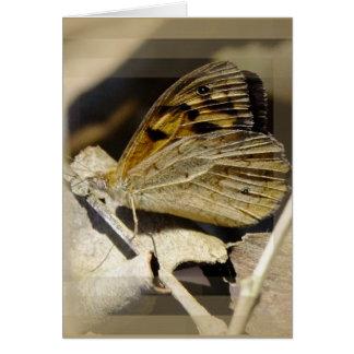 Cartes Rêver de papillon