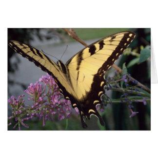 Cartes Rêves de papillon