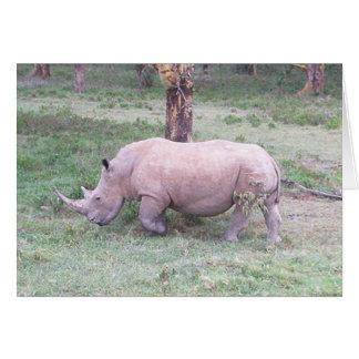 Cartes Rhinocéros blanc