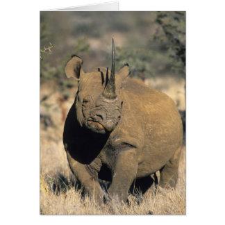 Cartes Rhinocerous noir, (bicornis de Diceros), du nord