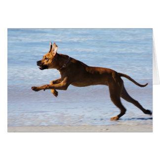 Cartes Rhodesian Ridgeback - saut