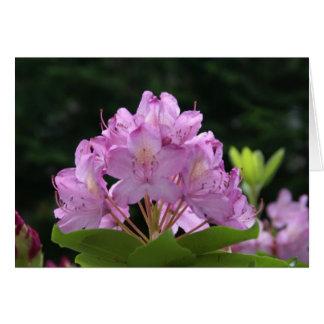 Cartes Rhododendron lilas