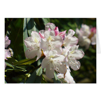 Cartes Rhododendrons 172