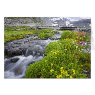 Cartes Rivière trouble avec les fleurs sauvages roses