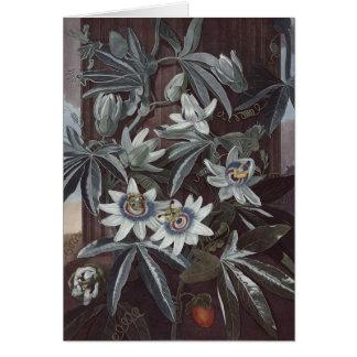 Cartes RJ Thornton - Passion-fleur bleue