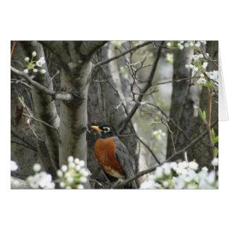 Cartes Robin et fleurs de poirier de Bradford, ressort