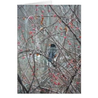 Cartes Robyn en hiver