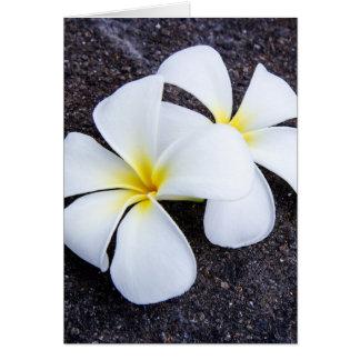 Cartes Roche florale de lave de Plumeria de Frangipani