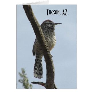 Cartes Roitelet de cactus Tucson Arizona