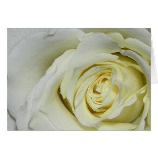 Cartes Rose blanc
