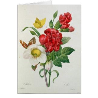 Cartes Rose de Noël, Helleborus Niger