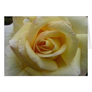 Cartes rose jaune