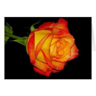 Cartes Rose jaune-orange
