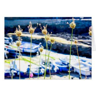 Cartes Roses de mer les Cornouailles